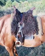 http://mongol.agria.hu/tamus/pa020096_t.jpg